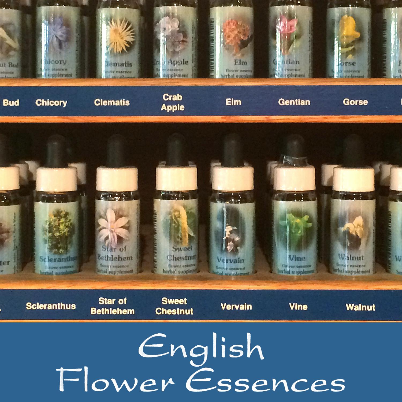 White Chestnut 75 Ml Living Earth Herbs Organic Bulk Herbs
